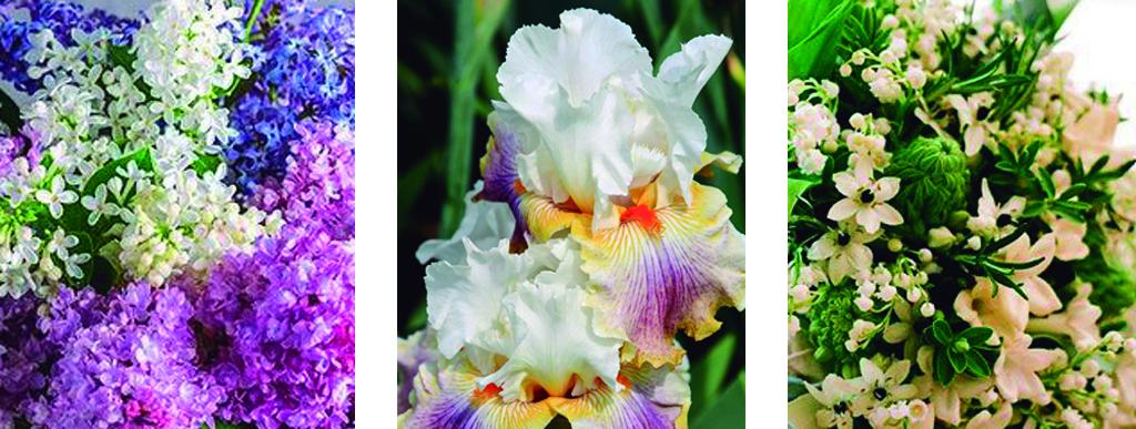 Flores personalidad
